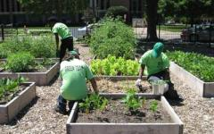 Greenhouse provides fresh food for cafeterias