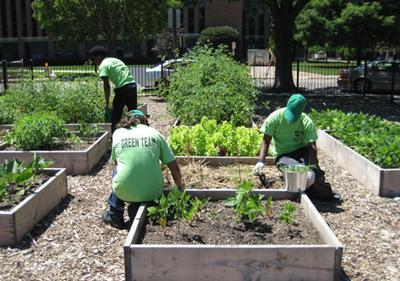 ETHS students garden.